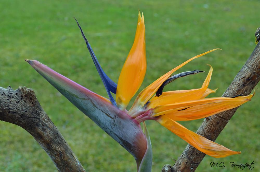 Favorit Créations déco colorées originales avec des fleurs ou autres  RJ45