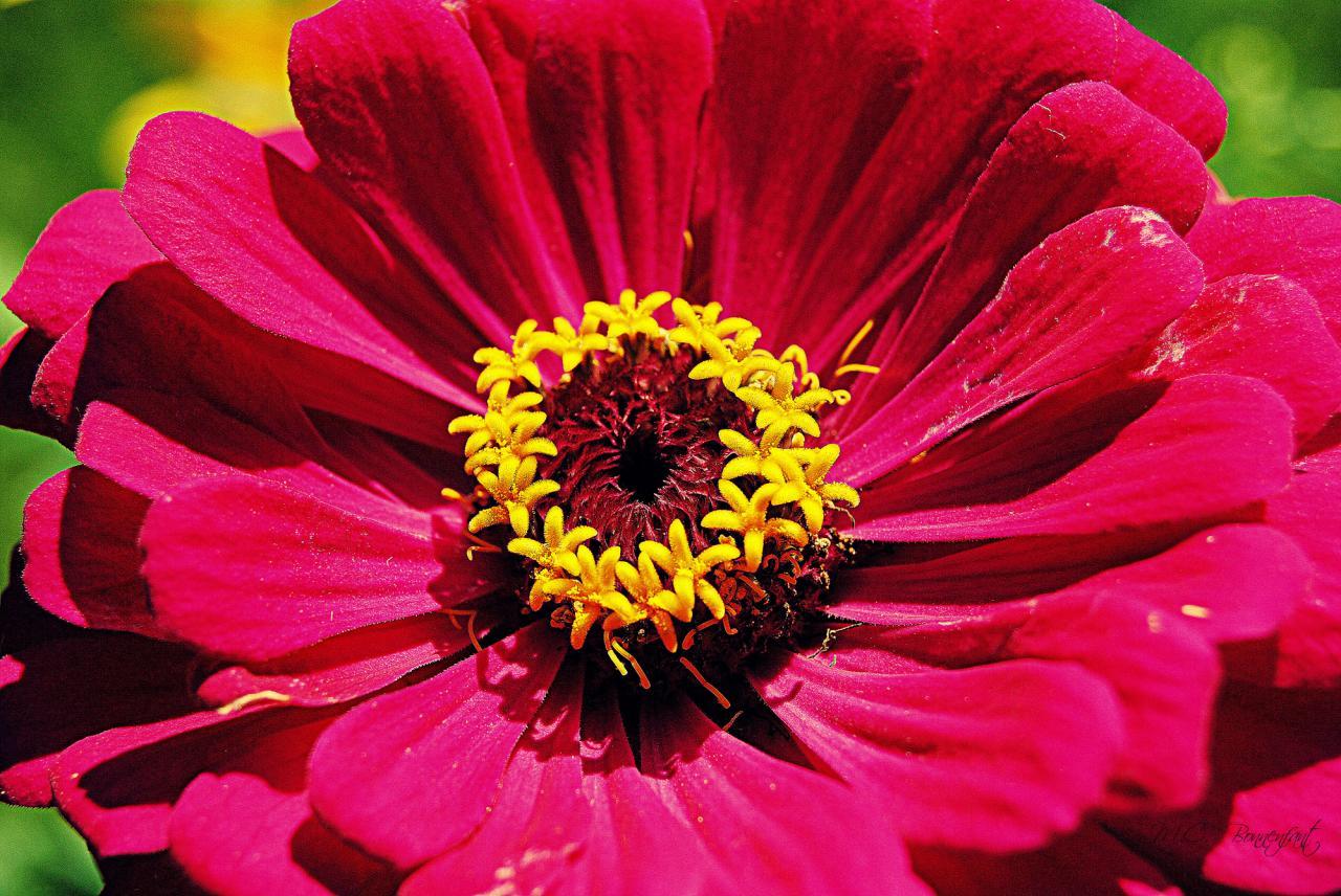Photos De Fleurs Colorees Sauvages Et De Nos Jardins Roses