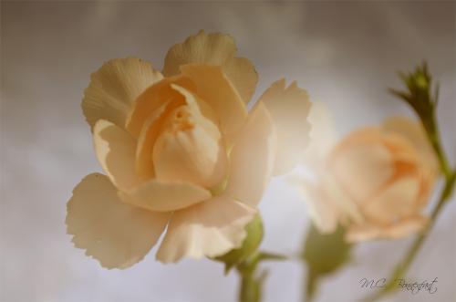 douce-fleur-vintage-.jpg