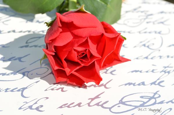 Fleur Romantique Rouge Photos De Magnolisafleur