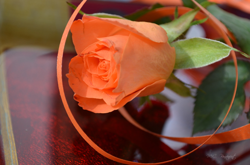 rose-orange-deco-.jpg